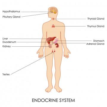 hormon-behandlung-münchen